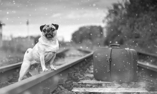 Viaggiare in treno con il cane: informazioni utili